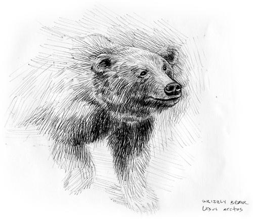 081108_brownbear2