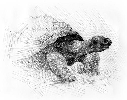 081108_turtle