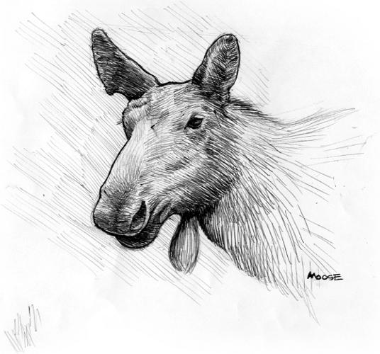081113_moose1