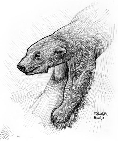 081113_polarbear