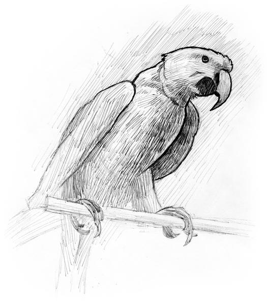 081120_parrot