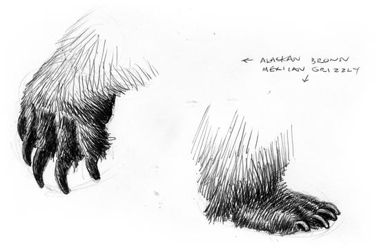 081121_bearclaws