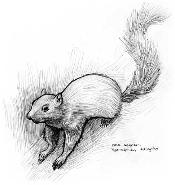 081212_rocksquirrel1